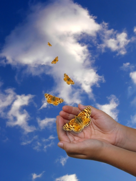 image of butterflies being released