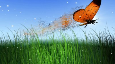 stock-footage-flying-butterfly-with-grass-and-sun